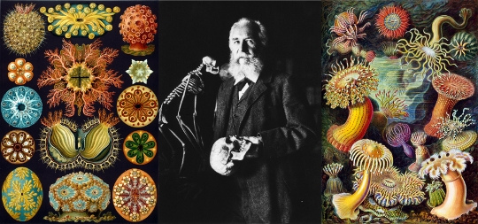 haeckel strip