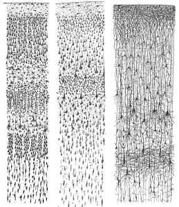 Cajal_cortex_drawings